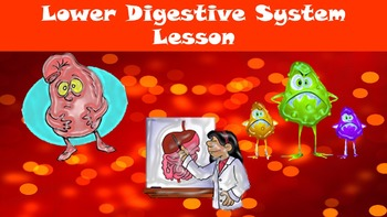 Lower Digestive System No Prep Lesson w/ Power Point, Work