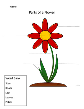 Lower Elementary Parts of a Flower