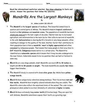 MANDRILLS_ARE_LARGE_MONKEYS_RIGOROUS_ASSESSMENT_DR_LOCKETT