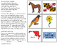 MARYLAND State Symbols ADAPTED BOOK for Special Education