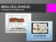 MEGA Cell Bundle: Prokaryote and Eukaryote, Simple and Com