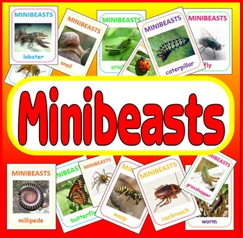 MINIBEASTS FLASHCARDS - 74 x A5 - SCIENCE DISPLAY KS1 KS2 INSECTS