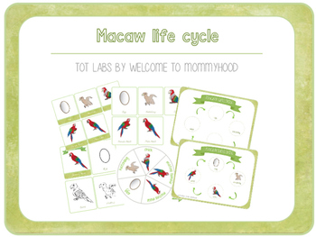 Montessori inspired macaw life cycle printables and activi