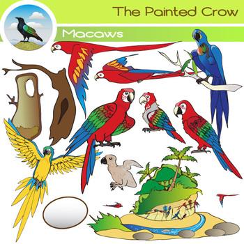 Macaw Life Cycle - Bird Clip Art Set - Parrots - 28 Piece