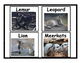 Mammal Flashcards