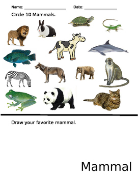 Mammal Worksheet