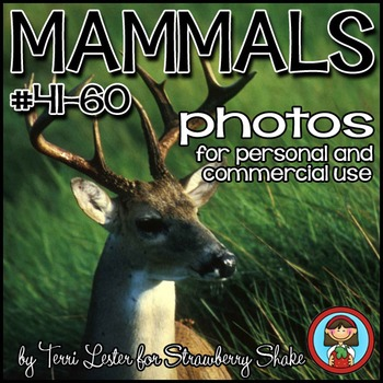 Photos Photographs  Mammals #3  Science and Nature Persona