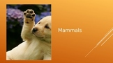 Mammals Powerpoint