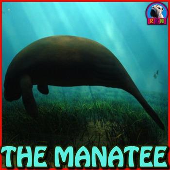 Manatees - PowerPoint & Activities