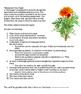 """Marigolds"" by Eugenia W. Collier One-Pager Assessment"