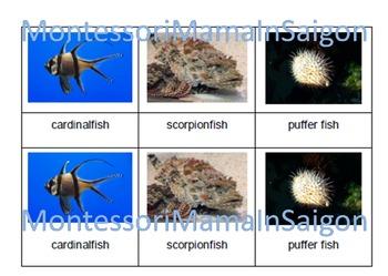 Marine Fish Montessori Three Part Cards
