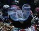 Marine Life Turtles Fish Octopus Digital Photos