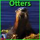 Marine Mammal Bundle - PowerPoint Presentations, Activitie