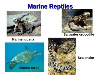 Marine Reptiles Powerpoint