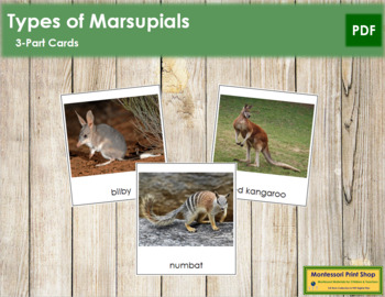 Marsupials: 3-Part Cards