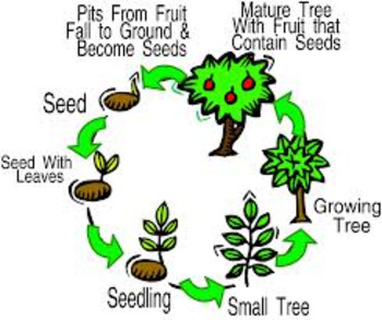Math & Science Mini-Book: Favorite Plant Life Cycle~ Tally