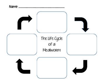 Mealworm Lifeycle Template