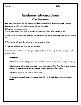 Mealworm Metamorphosis