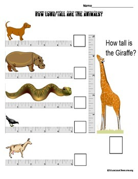 Measure the length or the height of the animals