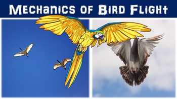 Mechanics of Bird Flight Lesson with Power Point, Workshee