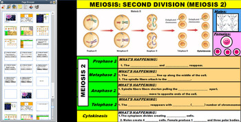 Meiosis Notes PDF Version