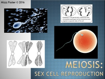 Meiosis: Sex cell reproduction Power Point