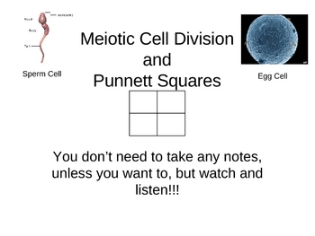 Meiotic Cell Division and Punnett Squares PowerPoint