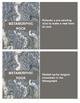 Metamorphic, Igneous, and Sedimentary Rock Flashcards