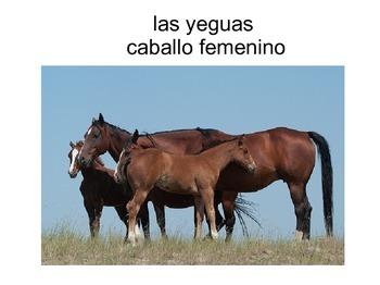 Mi caballo mago