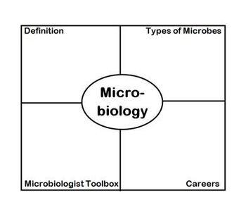 Microbiology Frayer Diagram