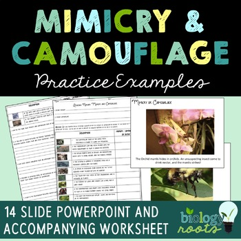 Mimicry and Camouflage Worksheet and Presentation