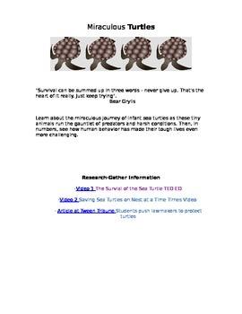 Enrichment Project-Turtles