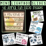 Mini Lightbox Slides - Animal Fun Facts!