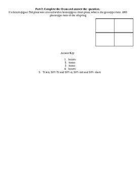 Mini Quiz: Punnett Squares