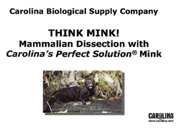 Mink Dissection Lab: PPT