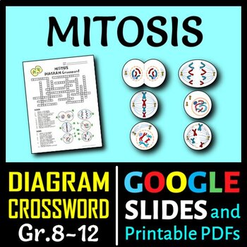 Mitosis Crossword with Diagram {Editable}