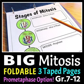 Mitosis Foldable - Big Foldable for Interactive Notebooks