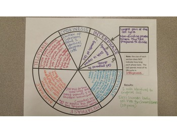 Mitosis Graphic Organizer for Interactive Science Notebooks