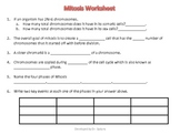 Mitosis Questions and Answer Key