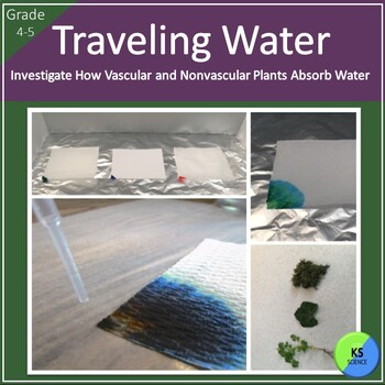 Model Water Transportation in Vascular and NonVascular Pla