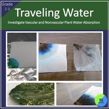 Model Water Trasportation in Vascular and Nonvascular Plan