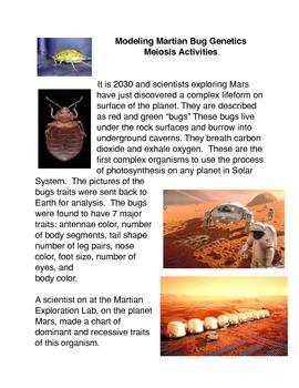Modeling Martian Bug Genetics Meiosis Activities