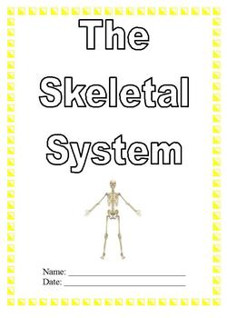 Modified Anatomy Notes & Test; Skeletal System Unit, Diffe