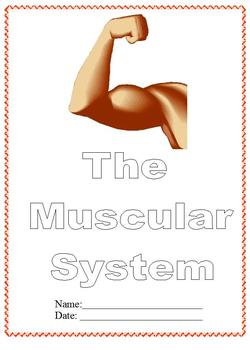 Modified Anatomy Notes/Questions; Muscular System Unit,Dif