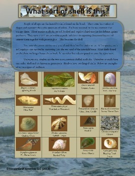 Mollusks:  Sorting Bivalves and Univavles - Florida Coasta