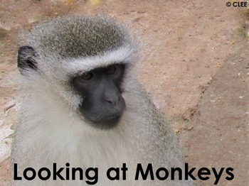 Monkey - Interactive PowerPoint presentation