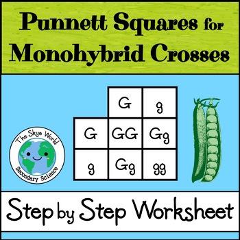 Monohybrid Crosses (Punnett Squares)