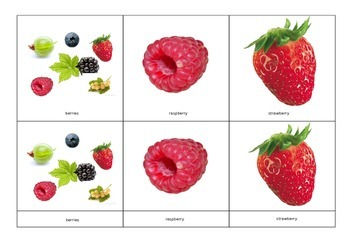 Montessori Classified Cards: Berries