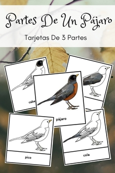 Montessori In Spanish Parts Of A Bird 3 Part Cards Montessorilove