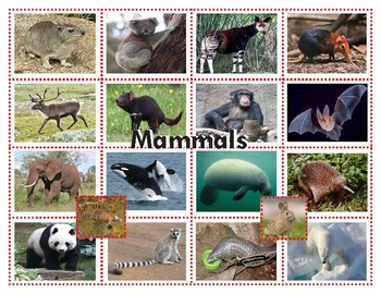 Mammals Super Bundle